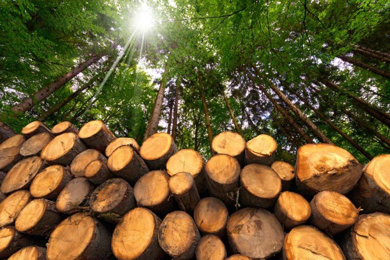 sustentarse_La empresa responsable y sostenible